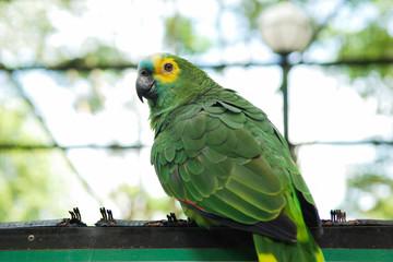 Little parrots in nature park