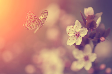 Garden Poster Spring Butterfly and flower