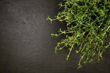 Potted thyme plant on slate with copyspace