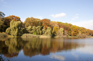 autumn trees and pond reflection