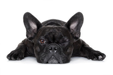 dog watching at you