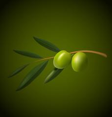 Olive tree branch on green background. Vector illustration