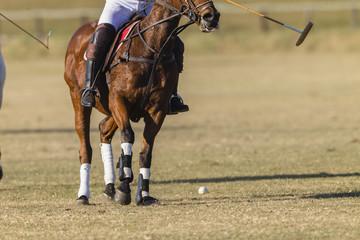Polo Horse Rider Field