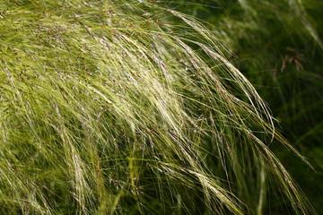 Green grass straws background