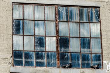 Pigeons on a broken window