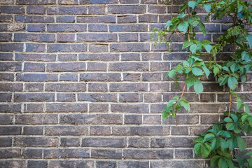 brick wall with green ivy