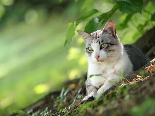 緑の斜面の猫