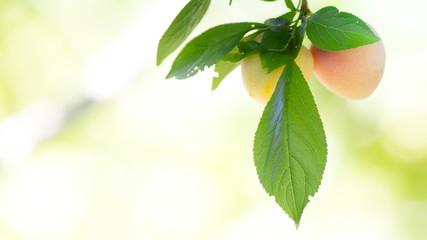 Fruit, macro photo in a vegetable garden.