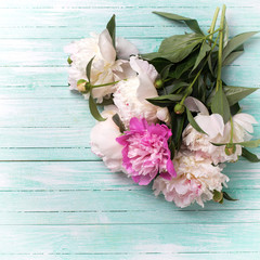 Splendid  white and pink  peonies flowers