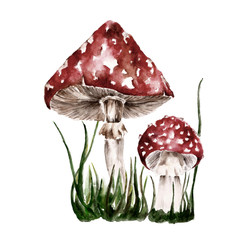 Isolated background, set with amanita, mushrooms. Watercolor illustration.