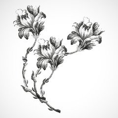 Hand-drawn bouquet of three flowers of lily, vintage isolated background vector illustration realistic sketch