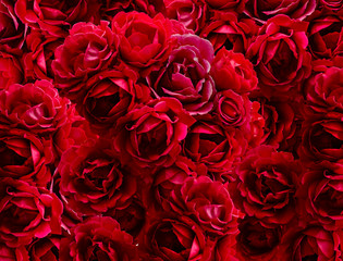Bush of red rose flowers background