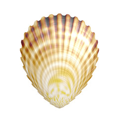 Scallop generated texture on white background
