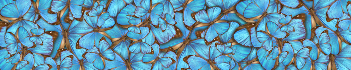abstract background tropical butterflys Morpho menelaus