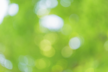 natural green summer bokeh background