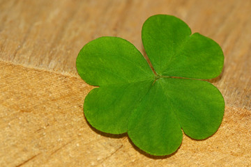 Clover leaf on wooden background