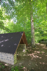 Hikers Refuge In A Beech Forest