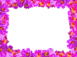 Frame of Beauty Pink Orchids