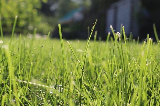 Кузнечик на траве