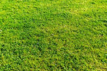 Rasen Wiese Hintergrund