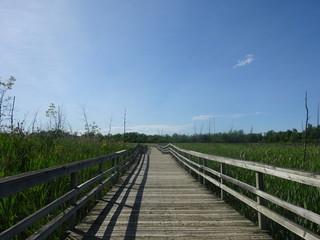 Passerelles entre la mangrove