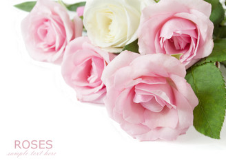 Pink and white roses bunch isolated on white background