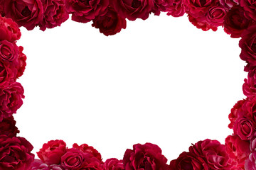 Frame with bush of red rose flowers background isolated on white