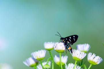 Insetto su fiore, fiore bianco sfondo verde prato e cielo