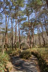 Yeongsil trail of Hallasan National park