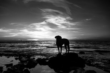 black dog at the beach (124)