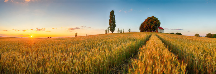 Tuinposter Platteland Summer wheat field panorama countryside, Agriculture