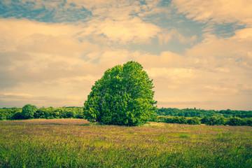 Big green tree on a field