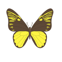 Vector image of the butterfly.