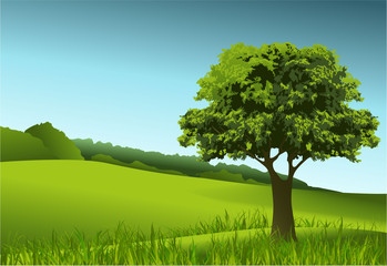 Green landscape with lonely tree