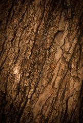 Bark of Oak Tree