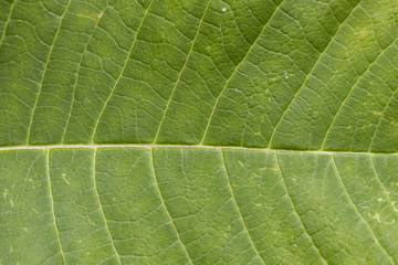 Leaf texture close up
