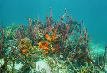 Colorful sea sponge animals underwater
