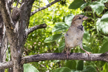 Wild Sparrow Brazilian Garden