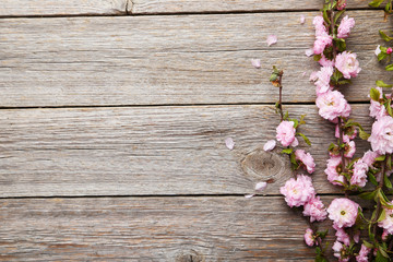 Spring flowering branch on grey wooden background