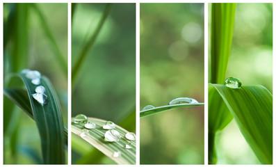 composition gouttes de pluie sur feuilles de bambou