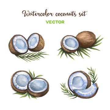 Watercolor coconuts set. Vector illustration.