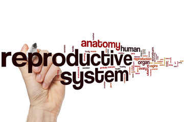 Reproductive system word cloud