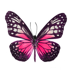Wall Mural - fancy butterfly isolated on white