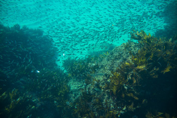 many fish and seaweed underwater