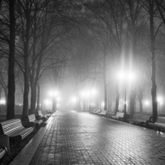 The avenue of autumn city park at night. Black and white.