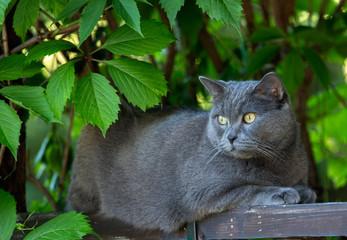 Кот под листьями дерева