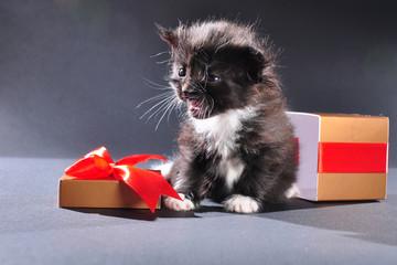 black kitten from Christmas present box