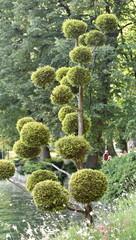 arbres...jardin public