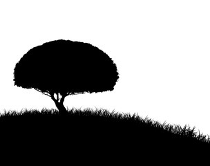 Tree Silhouette on Grassy Hill