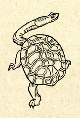 Snake-necked turtle (Chelidae)